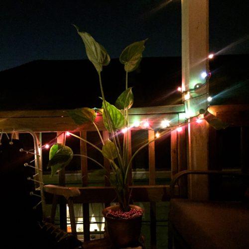 houseplant-at-night